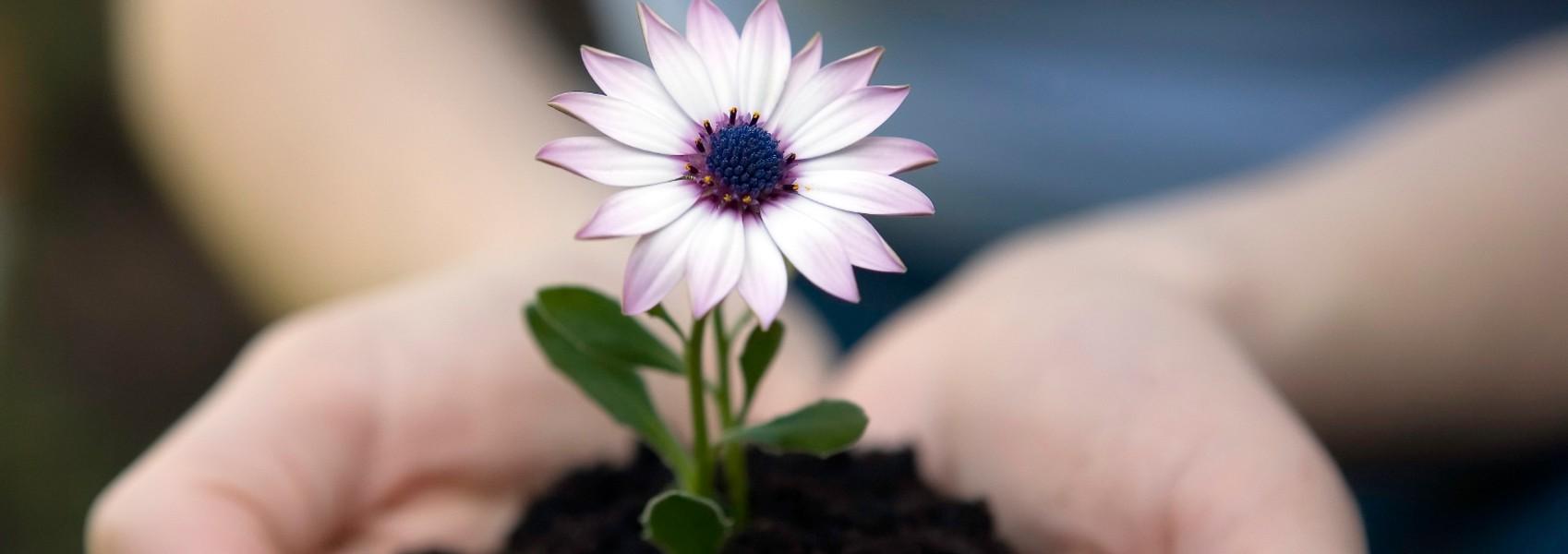 banner-flower