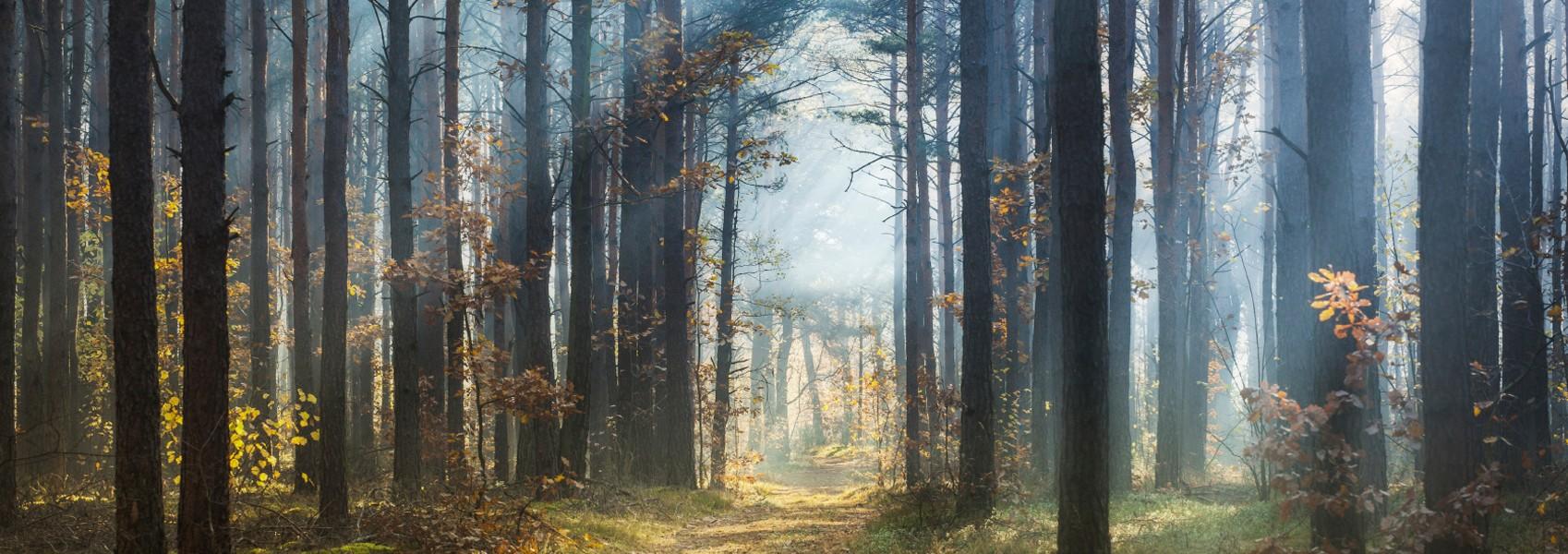 banner-tree